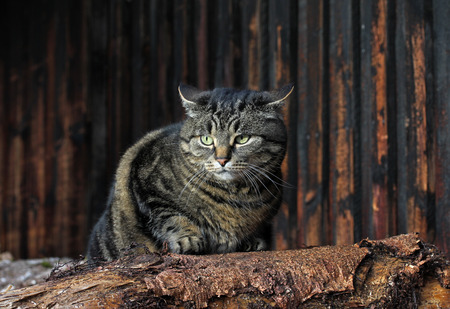 sullenly: an angry cat