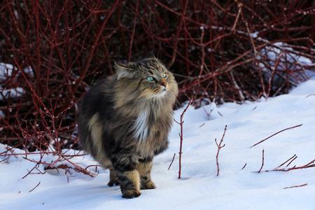 olfato: Un Bosque de Noruega percibe un olor