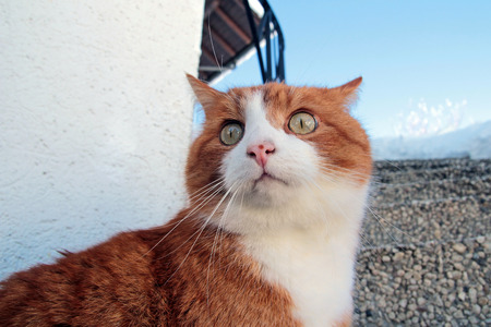 lurk: the funny looking red cat