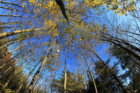 deciduous forest: Wide angle shot of a deciduous forest