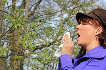 hayfever: Violent sneezing with hayfever. A woman has hay fever Stock Photo