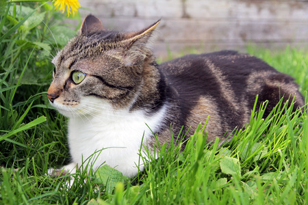 lurk: A little cat with a funny look in the grass