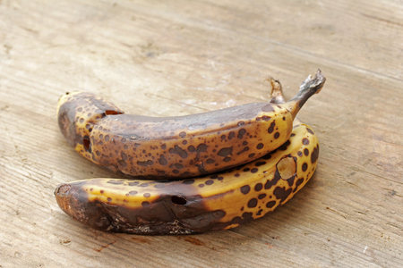 rotting: Two old, brown, rotting bananas