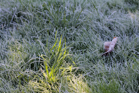 spring season: Ground frost in the autumn. In the shadow of the frost resting on the grass, in the sun it thaws