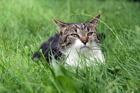 lurking: A little cat lurking in Their grass hiding