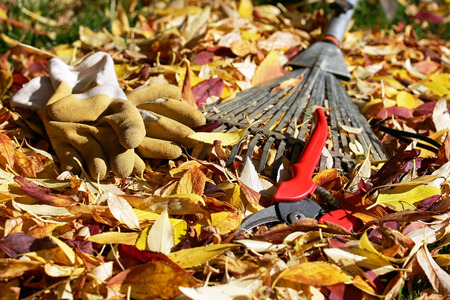 Garden Tools for gardening in the autumn season - Gardening in autumn