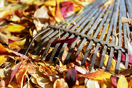 Close up of a leaf rake for Fall Foliage Stock Photo