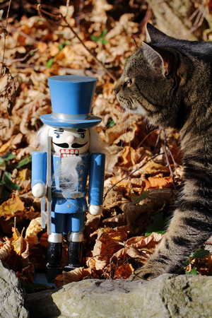 interested: The Nutcracker and the curious cat. The wooden toys and to interested cat
