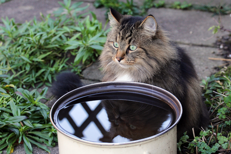 rainwater: Cats like to drink rainwater. A cat sits in front of a bowl of rainwater