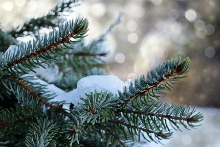 wintery: Wintery and Christmassy motif - fir branch with glitter and snow Stock Photo