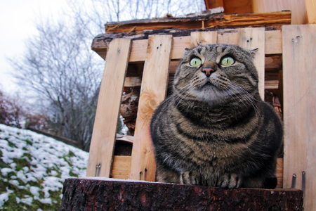 idiosyncratic: A funny look of a thick cat