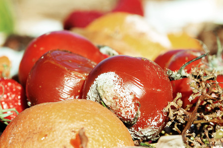 rotten fruit: .Rotten Fruit and vegetables on a garbage heap