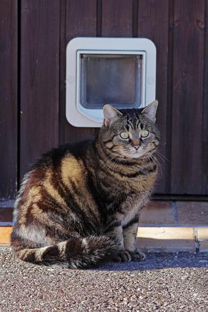 flap: Cat Flap - A door for cats