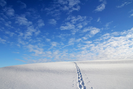 snowlandscape: Snowshoe tracks in a secluded winter landscape
