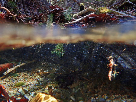 springwater: Over-and underwater shot of a river