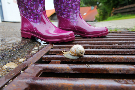 Rubber boots are ideal for rainy weather. A snail on the gulli