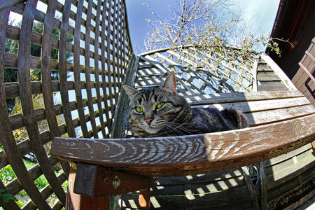curiousness: Wide angle view of a cat on a wooden bench