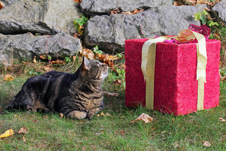A great gift for the cat. Christmas gift for the pet