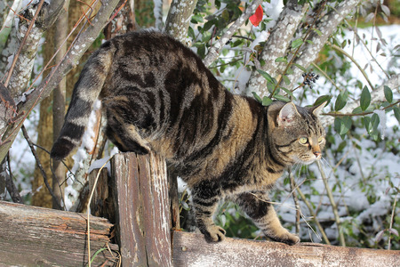 A cat climbs cleverly on a fence
