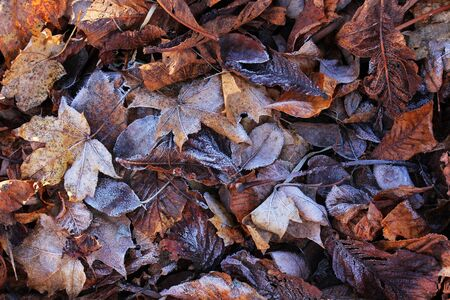 icily: Ground frost in winter. Rime on autumnal foliage