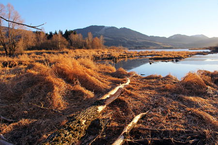 verb: Beavers have trees falling. A lake in the winter