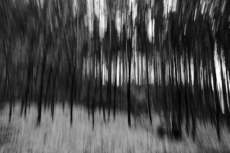 A blurred forest in autumn in black and white Stock Photo