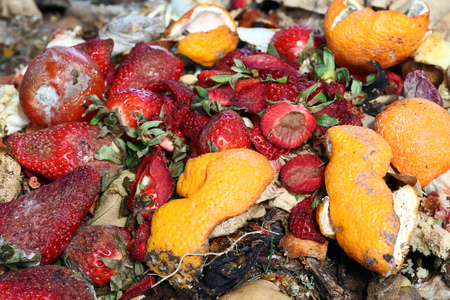 Spoiled fruit on a trash heap. Food gone bad Stock Photo