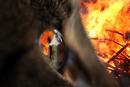 The fire in the eye. In an eye of a cat is reflected a fire Stock Photo