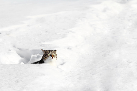 A small cat looks curiously out of the snow