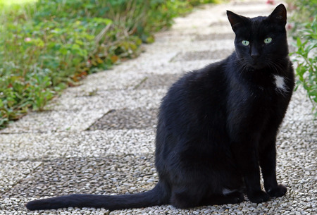 A tall slender black male cat Stock Photo