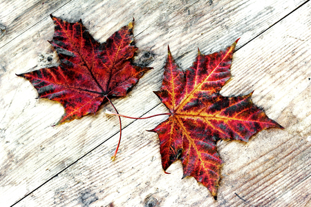 Two colorful autumn leaves on a wood substrate