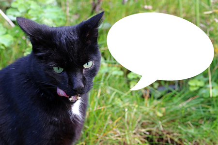 A black cat licks her mouth. A cat finds the food tasty