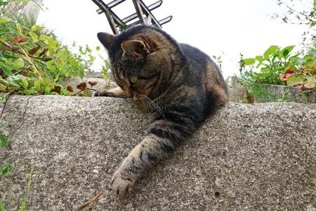 A curious cat at play Stock Photo