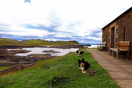 Scottish coast with stonehouse and sheepdogs. Border Collies in Scotland Stock Photo