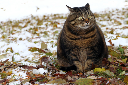 A little fat cat with a funny look