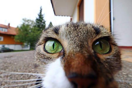 A curious cat looks straight into the camera's lens. Funny cat photo