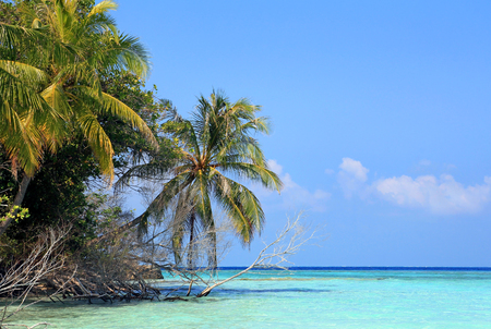 A Maldives island with coconut palms and turquoise sea. Maldives in the Indian Ocean Stock Photo