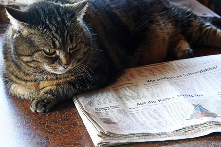 Newspaper readers are well informed. A cat reads a newspaper