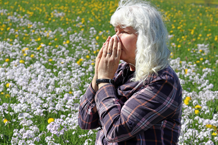 An older woman has hay fever. Hay fever begins in spring. A woman sneezes in a meadow