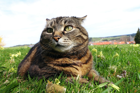 A little fat cat lying in the grass with a funny look Stock Photo
