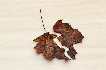 A two-part autumn leaf. A separate sheet
