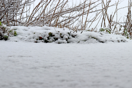 Fresh snow has fallen to the ground. Close-up at ground level of freshly falling snow Фото со стока - 116185630