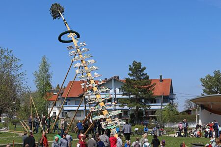 Setting up a May Tree on May 1 in Bavaria is a well-known tradition. Setting up a May Pole in Bavaria on May Day. City: Oy-Mittelberg, Germany, Bavaria, Allg?u, May 1, 2019