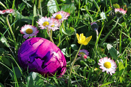 A pink easter egg between daisies in the meadow. A colorful easter egg in the grass