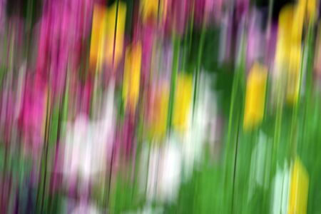 Fuzzy, blurred, colorful flowers in nature