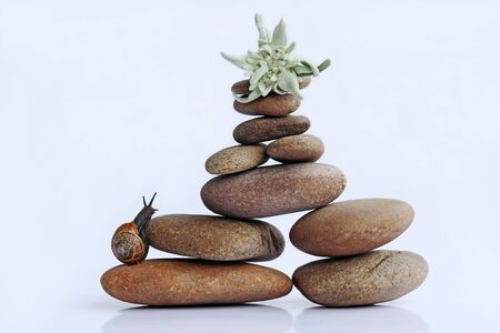 A snail wants to climb a mountain of stones to get to the Edelweiss.