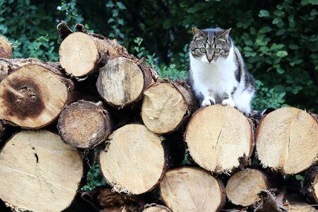 A brown-white cat is sitting on a stack of firewood. Фото со стока