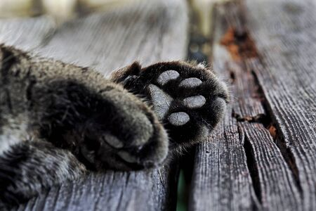 Close-up of cat paws. A cats paw from the underside