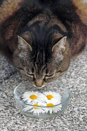 Is vegetarian food suitable for cats? Vegan cat food 스톡 콘텐츠