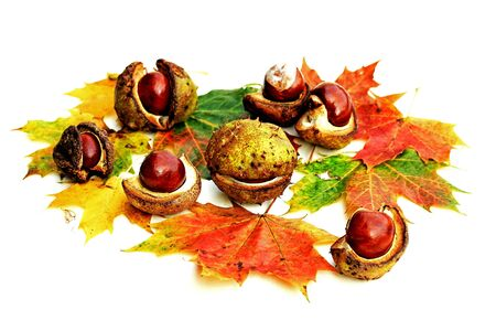 Colorful autumn background with chestnuts, autumn leaves, apple and hazelnuts Фото со стока